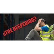 BODEGA / WAREHOUSE job image